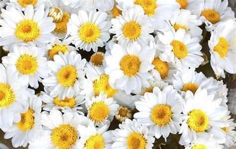 fiori back patrizia pellegrini fiori di bach