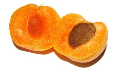 Jalan Balita Beludru aprikot kaya manfaat tapi waspadai untuk balita cantik tempo co