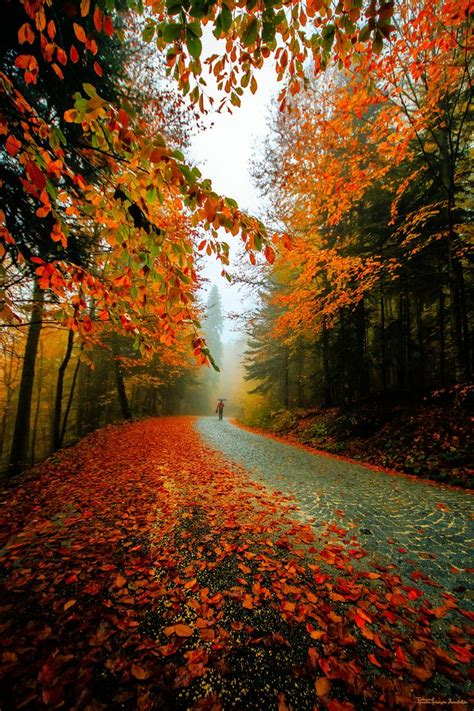 Autum In 526 best fall foliage images on autumn leaves