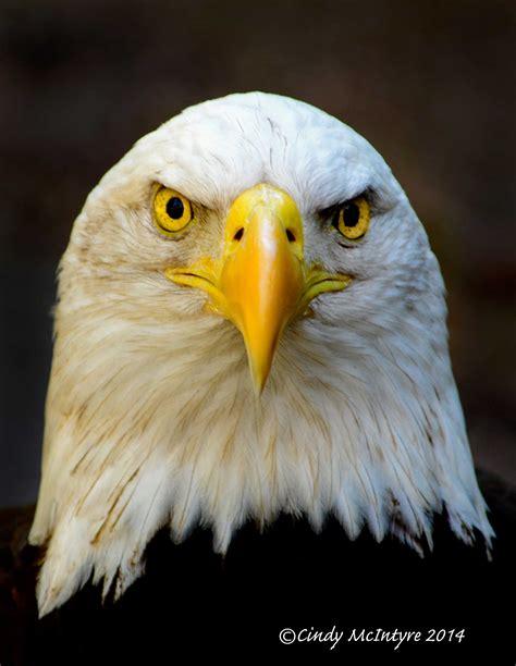 Zoos   Cindy McIntyre's Blog