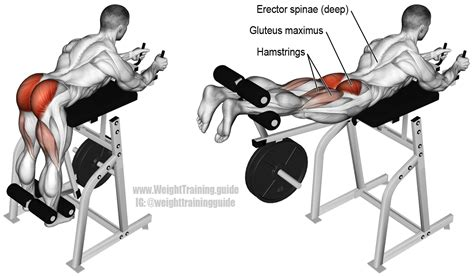 machine hyperextension guide and weight