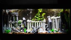 Tropical Theme Party Decorations - 75 gallon roman theme aquarium youtube