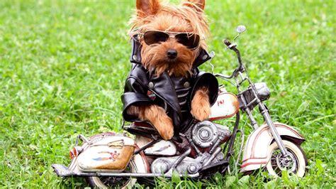 imagenes graciosas en hd fotos graciosa de perros hd 1920x1080 imagenes