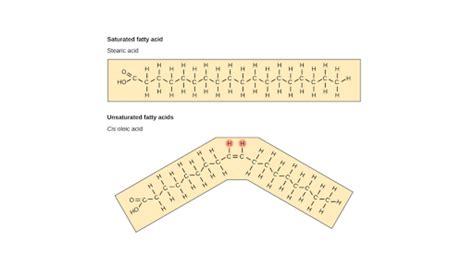 carbohydrates khan academy lipids article macromolecules khan academy
