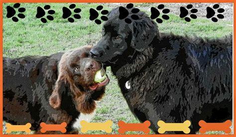 puppy broker rottweiler german shepherd mix puppies puppies puppy