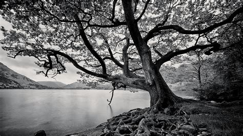 whit tree tree black and white iphone wallpapers 4292 amazing