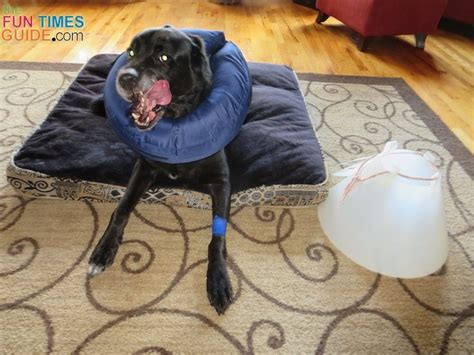 how to make dog cone more comfortable best 25 dog cone ideas on pinterest dog cone collar