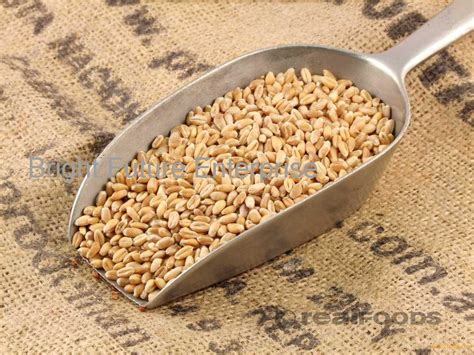 whole grains for sale high quality wheat grain for sale products south africa