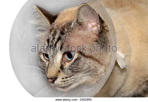 cone after surgery cone stock photos cone stock images alamy