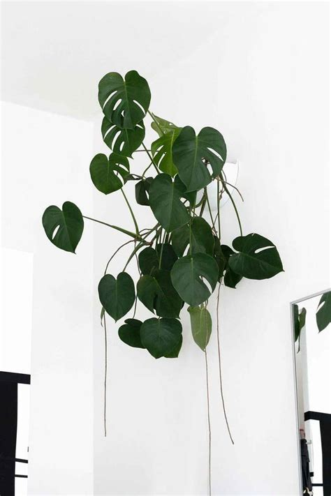 low light hanging plants indoors 25 best ideas about hanging plants on pinterest diy