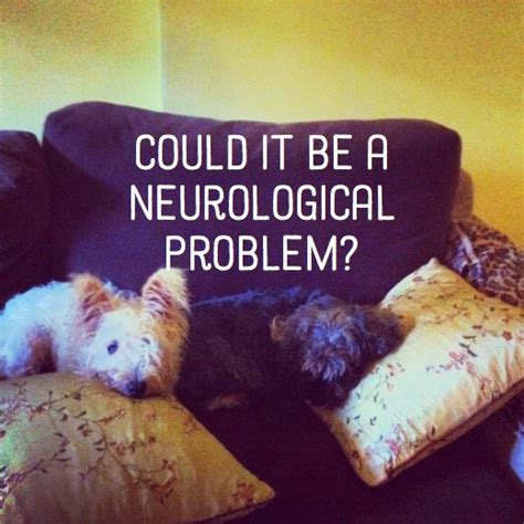 neurological problems in dogs warning signs of neurological disorders in canines pethelpful