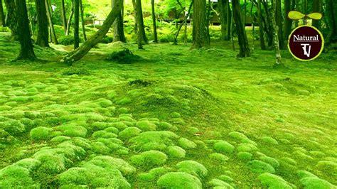 Green Garden by The Most Beautiful Green Gardens Relaxing Instrumental