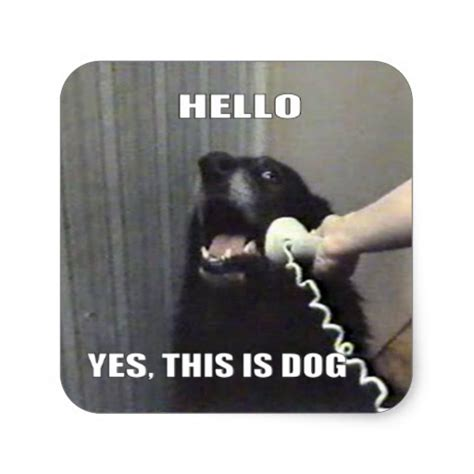 Hello This Is Dog Meme - hello yes this is dog square sticker zazzle