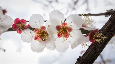 imagenes flores invierno fotos gratis naturaleza rama invierno madera blanco