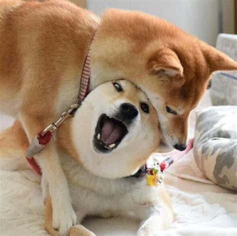 Doge Wow doge eats doge doge much wow