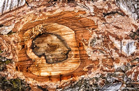 beautiful wood matthias hauser fotografie wood macro photos beautiful