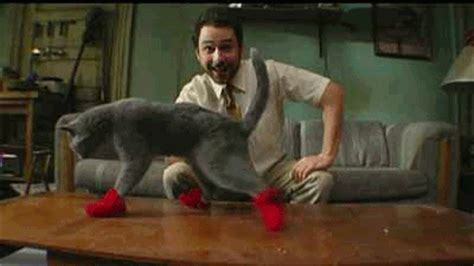 sock cat gif cat socks gifs find on giphy