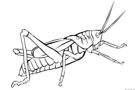 preschool grasshopper coloring pages free grasshopper printable coloring pages for preschool