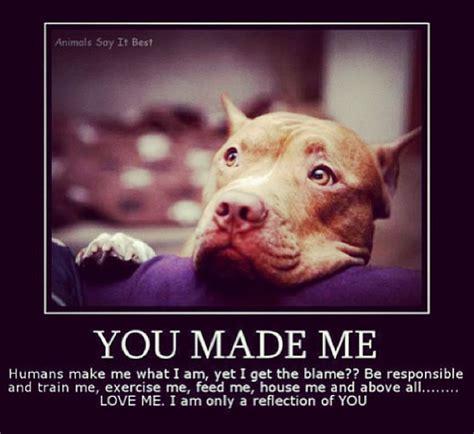 Bulls Memes - the 24 most annoying pit bull memes observer