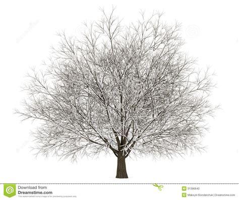 winter white tree winter hornbeam tree isolated on white stock illustration