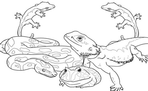 coloring pages wildlife animals 80 coloring pages for wild animals download