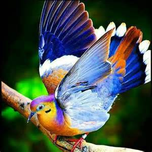 bird colors amazing collection of world best wallpapers 2016
