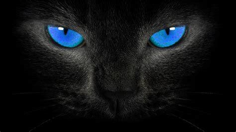Cat Eye Blue Berkualitas image hd wallpapers blackblue wallpaper black cat blue