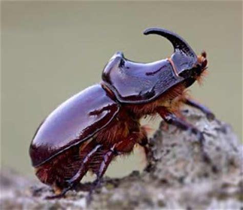 insetto nero volante scoperte su le ultime notizie dalla rete l