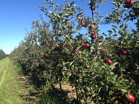 our fruits king orchards fresh fruit - Michigan Fruit Trees For Sale