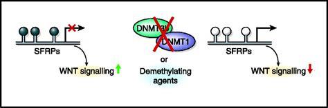 Midbass Genetic Cr 65 molecular target based treatment of human cancer summary