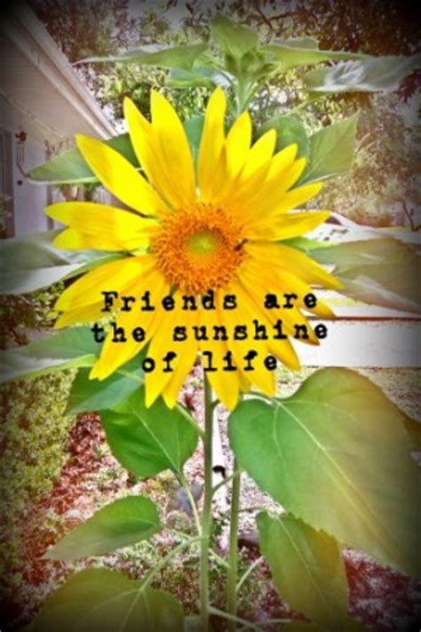 sunflower friendship quotes quotesgram