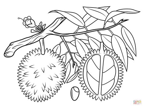 coloring page of olive tree olive tree coloring page newyork rp com
