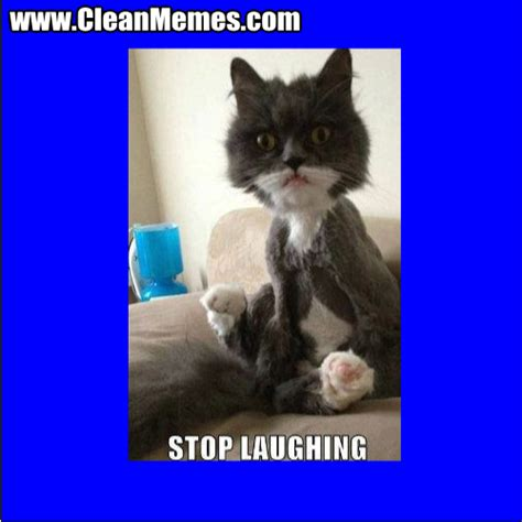 Laughing Cat Meme - clean memes clean memes the best the most online