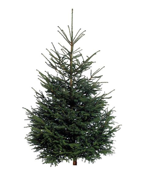 pound landscape christmas trees how to get an ikea tree for just 163 5