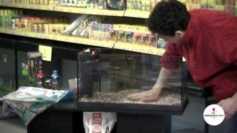 arredare un acquario come allestire un acquario