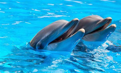 imagenes de amor animadas de delfines amor mioღ fotos de delfines lindos click para ver