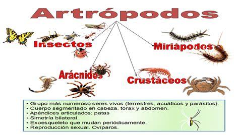 imagenes animales artropodos artr 243 podos con ciencia