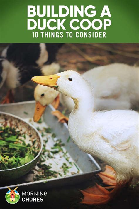 Things To Consider When Building A House 10 Important Things To Consider When Building A Duck Coop