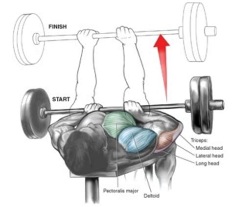 bench press flared elbows muscle specific training 3 triceps or is it triceratops
