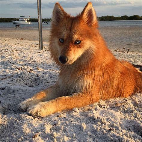 Like A Fox by Meet The Who Looks Exactly Like A Fox