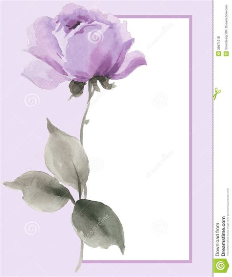 watercolor painting of beautiful single lavender r stock