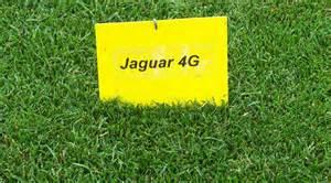 Jaguar Grass Seed Turf Horticulture Jacklin Seed Jacklin Seed Products