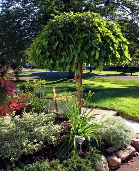Romantischer Garten Pflanzen by Romantische G 228 Rten Haengebaeume Garten Maulbeerbaum