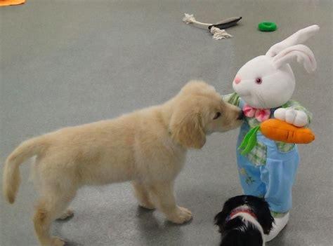 puppy preschool daycare center pooch pawsitive