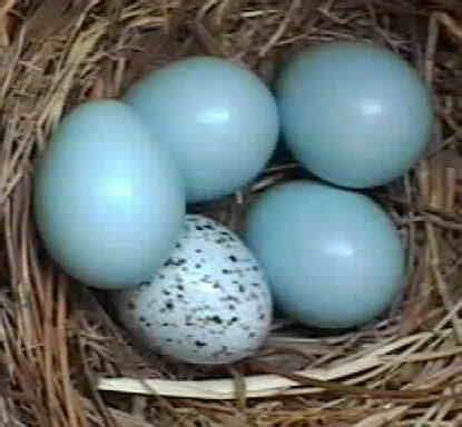 cardinal eggs color 301 moved permanently