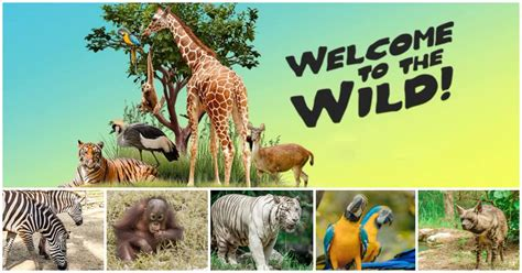 cebu safari  adventure park  biggest zoo