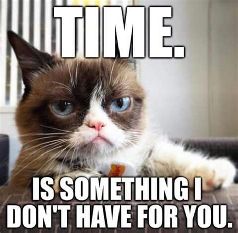 Best Angry Cat Meme - 25 best ideas about angry cat on pinterest grumpy cat