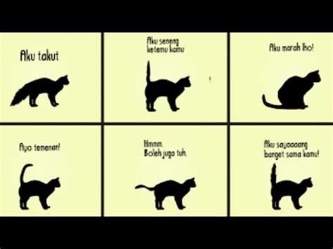 cara membuat zakar jadi besar inilah arti gerak ekor kucing anda youtube