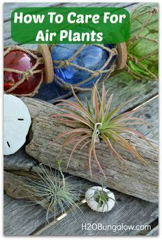 desk plant maintenance helpful tips to care for plants 1000 images about air plant care tips on pinterest air