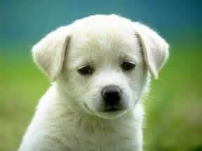 Trending cute puppy dog